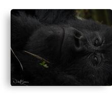 Humble One Canvas Print