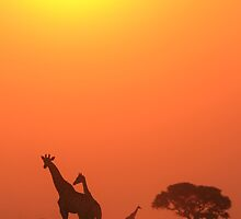 Giraffe Harmony of Freedom and Peace by LivingWild