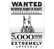 Loveable bull terrier wanted Poster