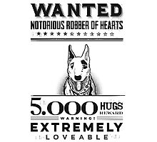 Loveable bull terrier wanted Photographic Print