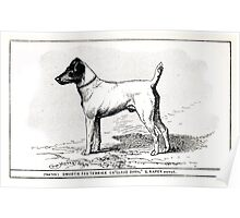 All about dogs a book for doggy people Charles Henry Lane 1900 0149 Smooth Fox Terrier_jpg Poster
