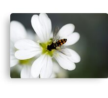 Keeping Buzzy Canvas Print