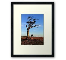 One Tree, Here and There Framed Print