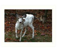 Piebald Deer, Maryland woods, United States Art Print