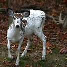 Piebald Deer, Maryland woods, United States by Eileen McVey