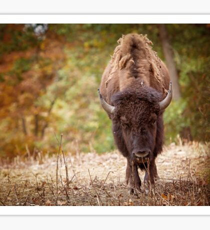 American Bison Buffalo in a fall setting Sticker
