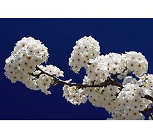 Blossoms In Blue Photographic Print