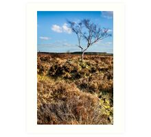 Lone Tree Peak District Derbyshire Art Print