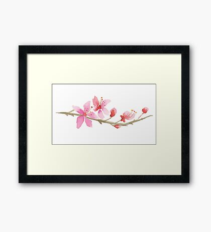 Cherry blossom water color painting Framed Print