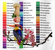 Kingfisher Colour Chart Poster