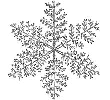 Snow Flake II Photographic Print