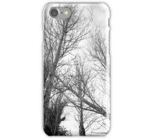The Fallen Trees iPhone Case/Skin