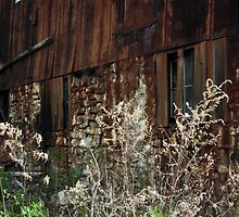 Tall Grass, Old Barn by BonnieToll