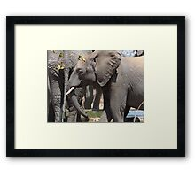'A Beautiful Baby in Grey' - Balule, South Africa Framed Print