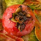 Persimmon by Randy Turnbow
