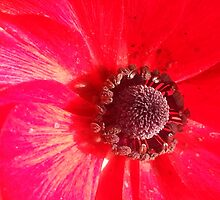 Red always makes me smile by MIchelle Thompson