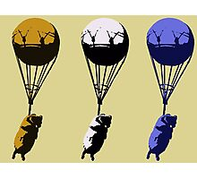 Flying goats 2 Photographic Print
