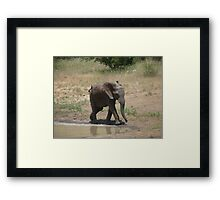 'I'm So Excited, I Just Can't Hide It.......' - Timbavati, South Africa Framed Print