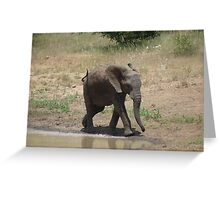 'I'm So Excited, I Just Can't Hide It.......' - Timbavati, South Africa Greeting Card
