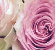 Blush Rose Sticker
