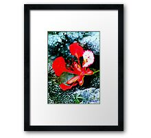 Royal Poinsiana on Florida Limestone Framed Print