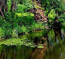 The Lily Pond I by Kathleen Daley