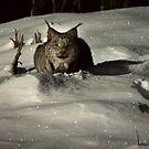 Magic Moon Cat by Marty Samis