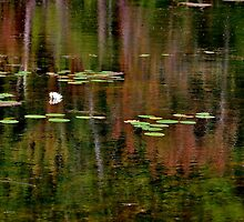 The Lily Pond II by Kathleen Daley