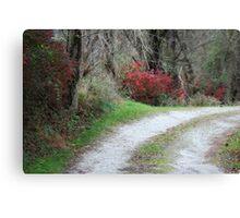 Lane with fire bush Canvas Print