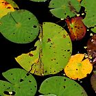 The Lily Pond III by Kathleen Daley