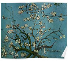 Van Gogh- Almond Blossoms Poster