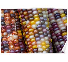 Variegated Indian Corn Poster