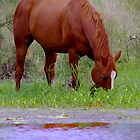 Red horse by the water by Penny Kittel
