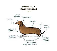 Anatomy of a Dachshund Photographic Print