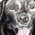 Black Labrador 2 by lizdomett