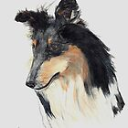 Rough Collie 2 by lizdomett