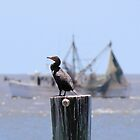 Posted Cormorant by Bob Hardy