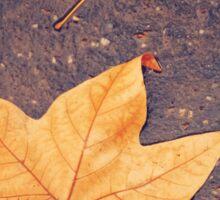 Autumn Background with Maple Leaf Sticker