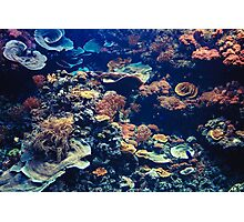 Tropical Aquarium with Small Fishes and Corals Photographic Print