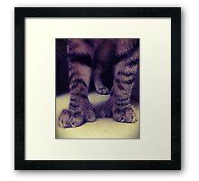 Big Kitten Paws Framed Print