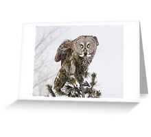 The perching prince Greeting Card