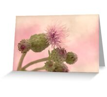 Canada Thistle - Digital Watercolor Greeting Card