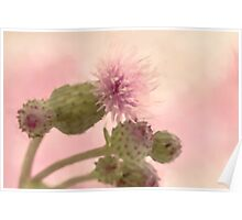Canada Thistle - Digital Watercolor Poster