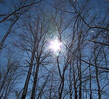 The Sun Through the Trees by DevinStar