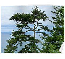 Tree at the Coast Poster
