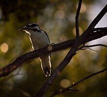 Nature's Alarm Clock by Betty MacRae