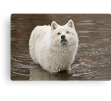 Oh my love where have you gone Metal Print
