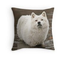 Oh my love where have you gone Throw Pillow