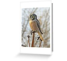 Precarious perch Greeting Card