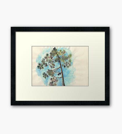 Pine Tree, Dune de Pyla Framed Print